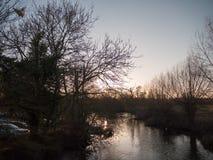 夜间秋天湖光秃的分支树河鸟 库存照片