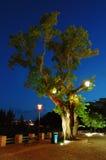 夜间结构树 库存照片