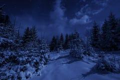 夜风景在冬天森林里 库存照片