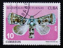 夜飞蛾, Heterochroma sp Noctuidae家庭,大约1979年 库存图片