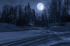 夜,月光的冬天森林 免版税库存图片