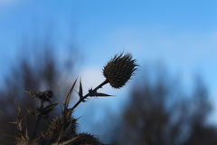 夜间山s日落ural冬天 植物在冬天凋枯 刺 宏观射击 自然 自然 免版税库存图片