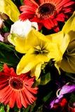 大丁草和百合花束  库存图片