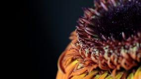 大丁草花卉抽象背景 免版税库存照片
