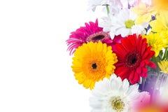 大丁草花束在白色背景的 免版税库存照片