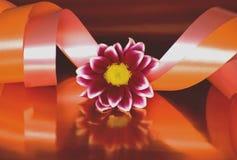 大丽花和色的丝带静物画  库存图片