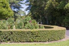 大丽花庭院和树篱,阿德莱德植物园 免版税库存图片