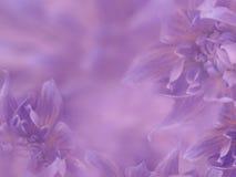 大丽花开花紫罗兰色桃红色被弄脏的背景 在被弄脏的背景的花 所有所有构成要素花卉例证各自的对象称范围纹理导航 节假日的看板卡 免版税库存图片