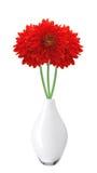 大丽花秋天在白色隔绝的花瓶开花 图库摄影