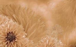 大丽花花卉淡桔色的美好的背景  与天使的花构成 库存图片