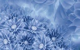 大丽花花卉白蓝色美好的背景  背景构成旋花植物空白花的郁金香 免版税库存照片
