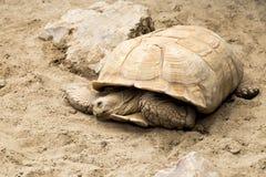 大乌龟 免版税库存照片
