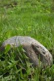 大偏僻的石头在绿草在 库存图片