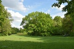 大偏僻的绿色树在草的夏天 免版税库存照片