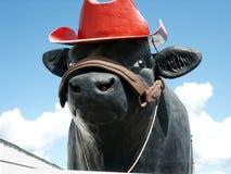 大公牛 库存图片