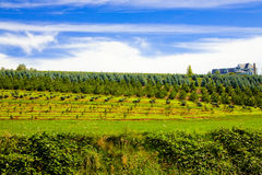 大农场农村结构树 库存图片