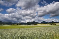 大农场绿色风景  免版税库存照片