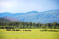 大农场西藏 免版税库存照片