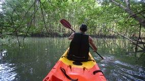 大力士荡桨有桨的皮船沿在美洲红树树中的河 股票录像
