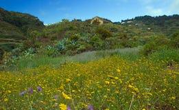 大加那利岛,内地nortern零件, Barranco de Azuaje 免版税库存图片