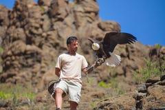 大加那利岛,西班牙- 2017年3月10日-在鸷的美国白头鹰在Palmitos公园的展示在Maspalomas,大加那利岛, Spai 免版税库存图片