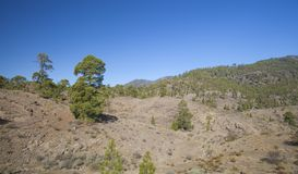 大加那利岛, 11月 免版税图库摄影