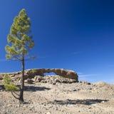 大加那利岛, Las Cumbres -海岛的最高的地区 免版税图库摄影