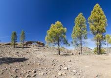 大加那利岛, Las Cumbres -海岛的最高的地区 库存照片