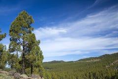 大加那利岛, Las Cumbres -海岛的最高的地区 免版税库存图片