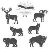 大动物在北美 向量例证