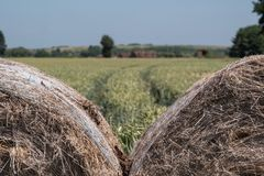 大包在前景的干草 麦田在背景中,与在天际和清楚的蓝天的树 免版税库存图片