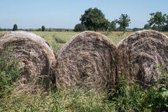大包在前景的干草 麦田在背景中,与在天际和清楚的蓝天的树 免版税图库摄影