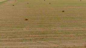大包在领域的干草 收获家畜饲料的干草 与干草的风景领域 影视素材