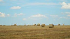 大包在黄色麦田的干草 领域和蓝色清楚的天空 库存图片