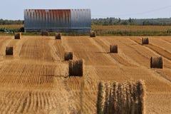 大包备草粮在周围 库存照片