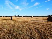 大包备草粮在周围 免版税库存照片