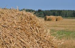 大包烘干农田以色列秸杆夏天 免版税库存照片