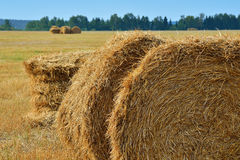 大包烘干农田以色列秸杆夏天 库存图片