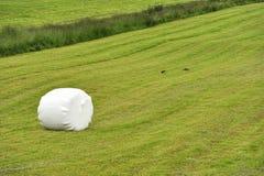 大包草甸滚的青贮 免版税图库摄影