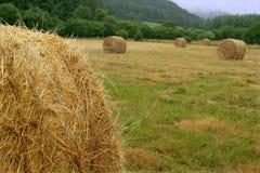 大包谷物干干草来回麦子 免版税库存图片