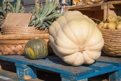 大南瓜和小南瓜在一个蓝色木立场在农夫销售季节性菜 免版税库存图片