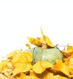 大南瓜和干燥叶子 免版税库存图片