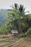 大厦农场泰国 库存照片