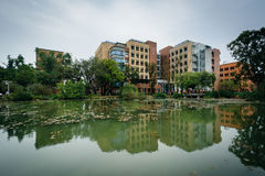 大厦和一个池塘国立台湾大学的,在台北 库存图片