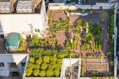 大厦屋顶的一个庭院 免版税图库摄影