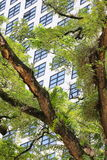 大厦高层 免版税库存图片
