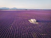 大厦鸟瞰图在培养的淡紫色领域普罗旺斯法国的 免版税库存图片