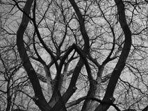 大反差在黑白颜色的死的树 免版税库存图片