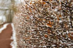 大反差结冰的树篱样式 库存图片