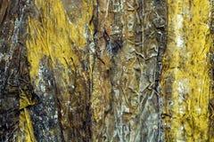 大叶子是包裹的干海带海草和健康 免版税图库摄影